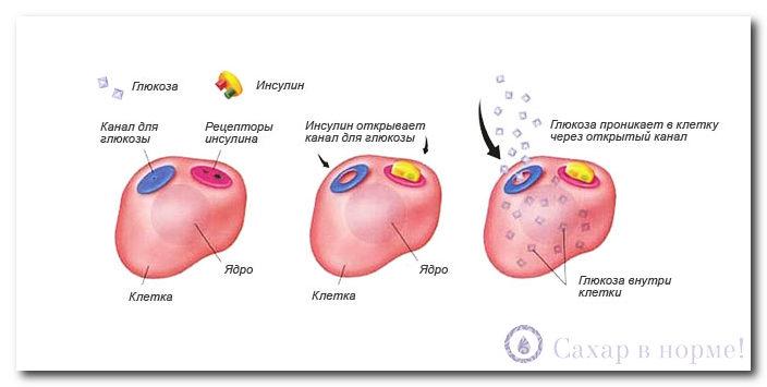 Сахарный диабет лечение по малахову