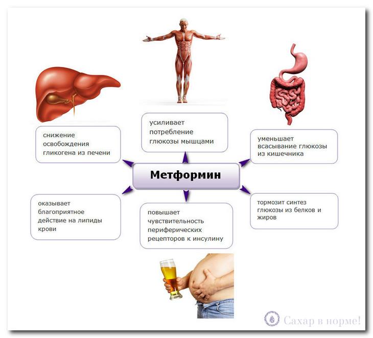 механизм образ действий препарата метформин