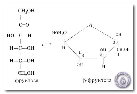 циклическая форма фруктозы