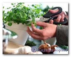 стевия выращивание в домашних условиях из семян