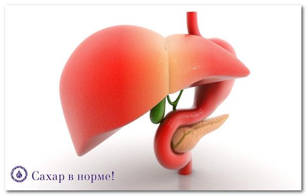 Жировой гепатоз исчезает на низкоуглеводном питании