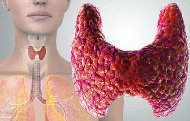 Какую роль выполняет щитовидная железа в организме человека?