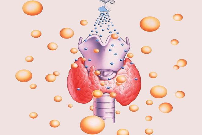 Синтез гормонов щитовидной железы: норма и патология