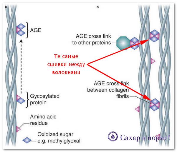 гликозилирование белков
