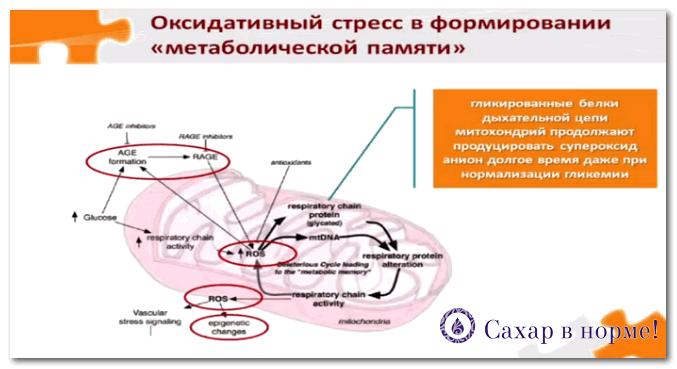 гликирование митохондриальных белков